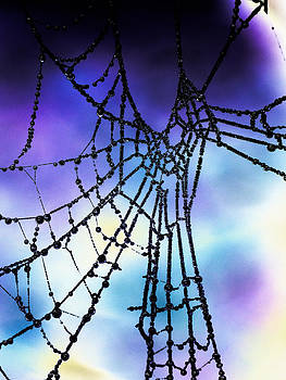 Hakon Soreide - Pearls of Water in Spider
