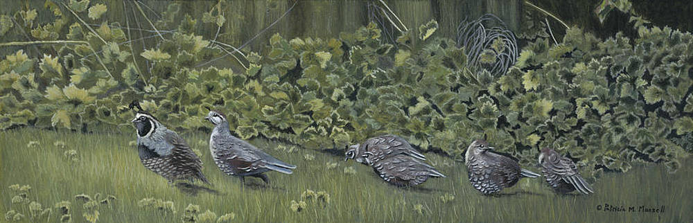 PECKING ORDER- Quail Family by Patricia Mansell