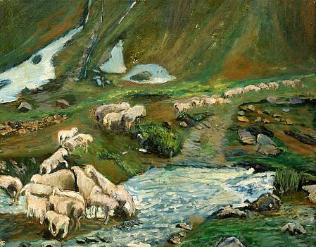 Pecore by Niki Mastromonaco