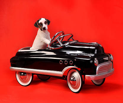 Pedal Car Puppy on Red by Rebecca Brittain