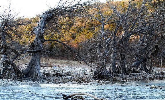 Pedernales River by Jack Thomas