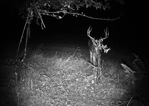 Peek A Boo Buck by Steve Battle