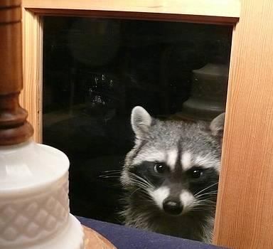 Peek-a-boo Darling V by Jacquelyn Roberts