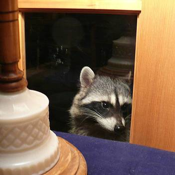 Peek-a-boo Darling Vl by Jacquelyn Roberts
