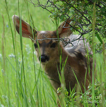 Playing Peek a Boo in Evergreen Colorado by Phyllis Britton