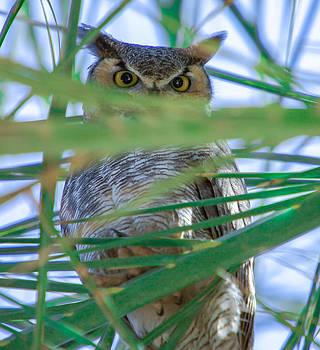 Peek-A-Boo by Robert  Aycock