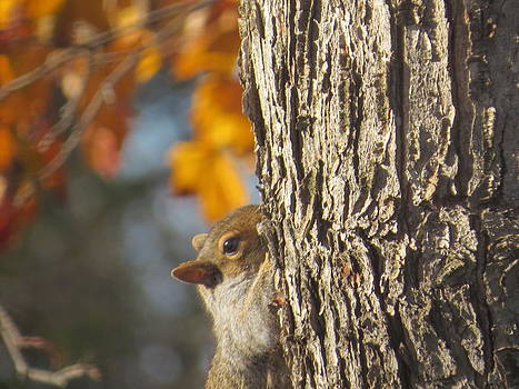 Peek A Boo Squirrel by Elisabeth Ann
