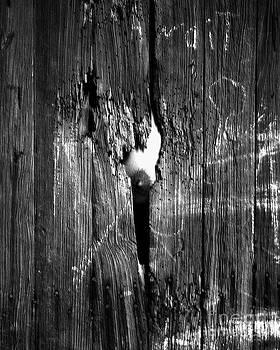 Peek a Boobie by Jimm Roberts