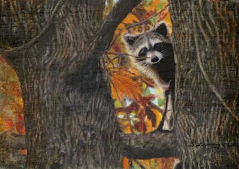 Peeking Bandit by Sherryl Lapping