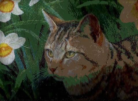 Anne-Elizabeth Whiteway - Peeking Kitty