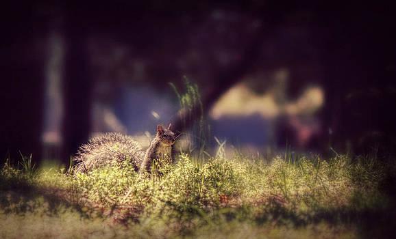 Peeking Squirrel  by Melanie Lankford Photography
