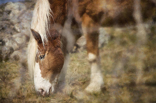 Peeking Through The Fence by Kathy Jennings