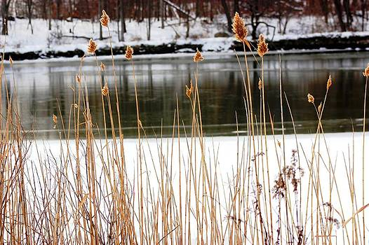 Peeking Through The Reeds by Judy Palkimas