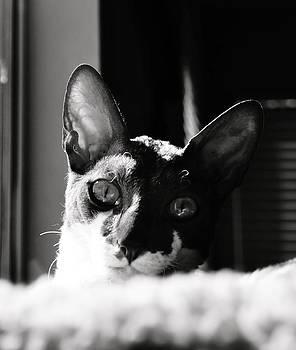 Peeking by Tracey McQuain
