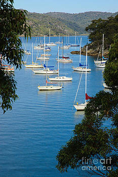 David Hill - Peeping through the trees - Yachts moored in a quiet river