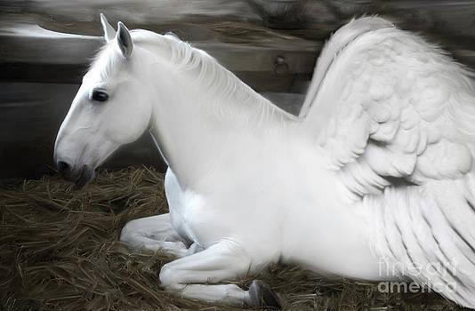 Pegasus by Lynn Jackson