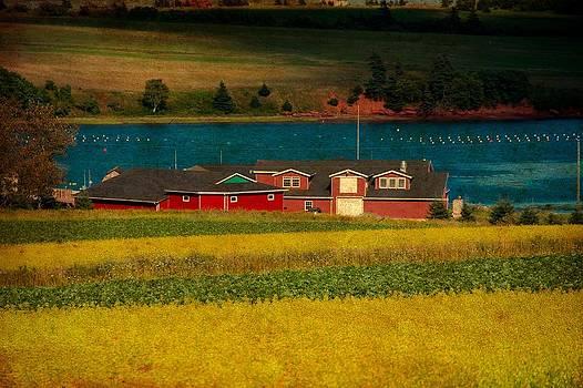 Laura Carter - PEI Wheat Fields Fine Art Photograph