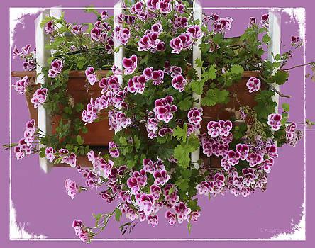 Dee Flouton - Pelargonium Bouquet