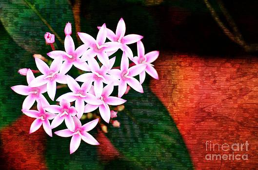Pelargonium Graveolens II by Floyd Menezes