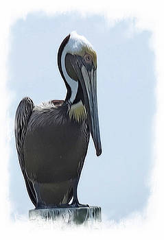 Pelican 1196 by J D  Whaley