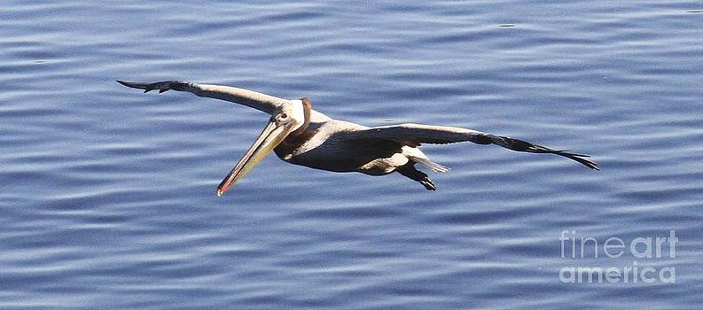 Pelican 2228 by South Bay Skies