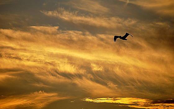Pelican Against the Golden Sky by AJ  Schibig
