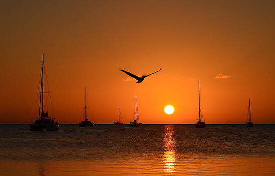 Pelican and Boats Sunset by Kerry Hauser
