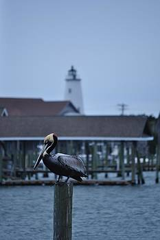Pelican and Lighthouse by Jeff Moose