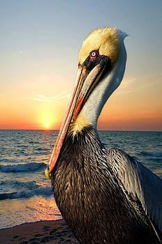 Carmen Del Valle - Pelican At Sunset