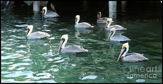 Pelican Ballet by Claudette Bujold-Poirier
