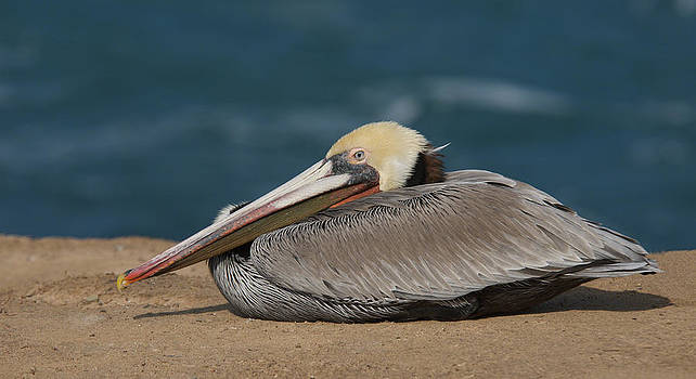 Pelican Beach by Bob Smithing