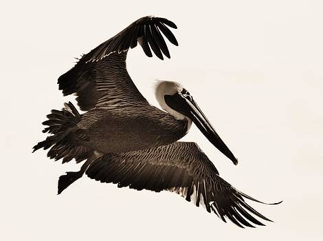 Paulette Thomas - Pelican Black and White
