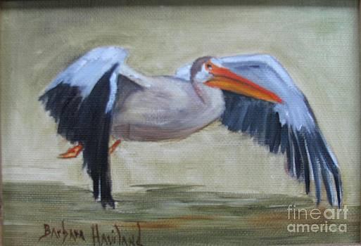 Pelican in Flight by Barbara Haviland
