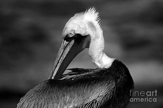 Pelican In Waves by John F Tsumas
