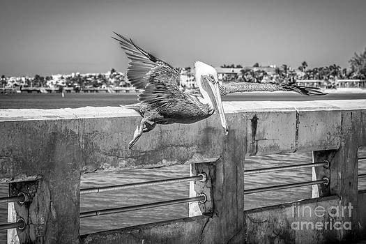 Ian Monk - Pelican Landing White Street Pier Key West - Black and White