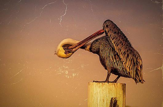 Ludmila Nayvelt - Pelican
