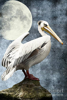 Angela Doelling AD DESIGN Photo and PhotoArt - Pelican Night
