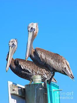 Pelican Pair II by Andre Turner
