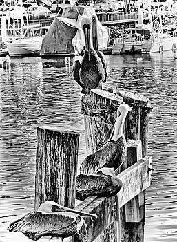 Robert Meyers-Lussier - Pelican Pier at Monterey Bay
