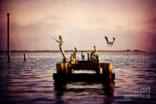 Pelican Pier by Joan McCool