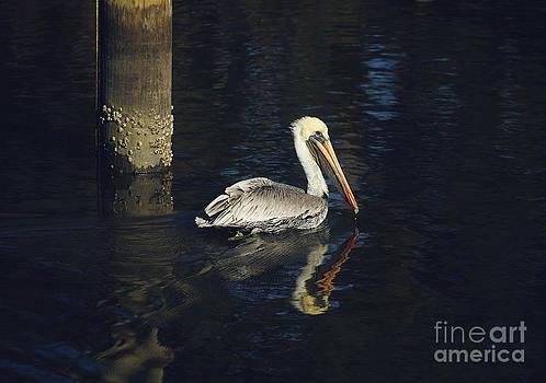 Pelican Reflection by Joan McCool