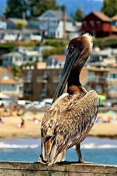 Pelican Rest by Rebecca Adams