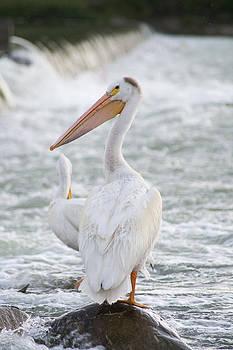 Dwayne Schnell - Pelican Watch