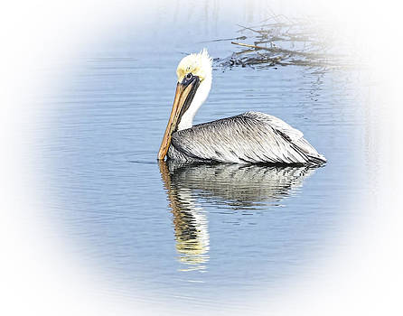 Terry Shoemaker - Pelican with Reflecion