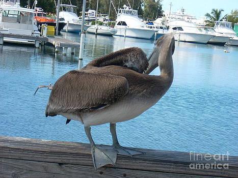 Pelicano by Iris  Mora