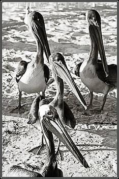 Agus Aldalur - Pelicanos
