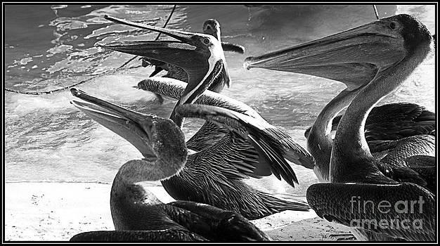 Agus Aldalur - Pelicanos con hambre