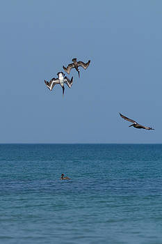 Paul Rebmann - Pelicans Diving