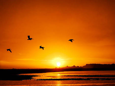 Terry Shoemaker - Pelicans Flying in the Sunrise