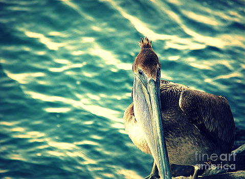 Susanne Van Hulst - Pelicans New Hair Do